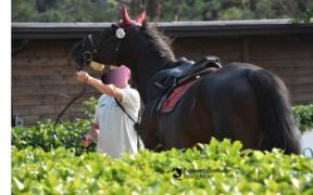 Troppi frustrati commettono abusi sui cavalli...