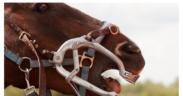 La New Zealand Veterinary Association divulga gratuitamente video sull'odontoiatria equina 1