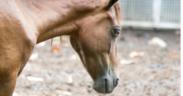 Lo sapevate che il cavallo che non sta bene cerca di nascondere il suo malessere fisico?
