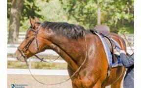 Come fanno i cavalli - un cavaliere fallito si confronta