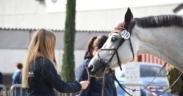 I cavalli si legano all'uomo solo perché dà loro sicurezza