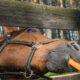 Uno studio rivela che i cavalli conoscono le nostre intenzioni