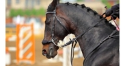Vendite e cambi di sella: come e quanto influiscono sul cavallo sportivo?