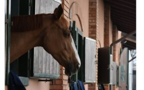 Vita in scuderia: 10 cose che la gente di cavalli non sopporta...