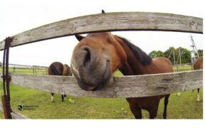 12 cose che la gente di cavalli è stanca di sentire