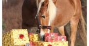 7 cose che i cavalli desiderano per Natale