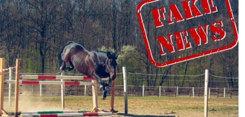 Horse Scammers: in rete contro fake news & profiles 1
