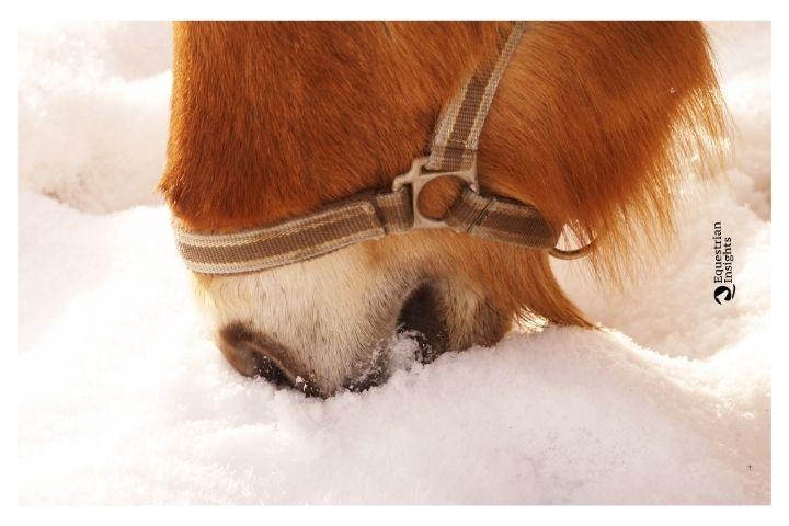 Idratazione dei cavalli in inverno: istruzioni per l'uso