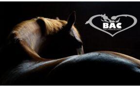BAC Technology: tecnologia innovativa a servizio del cavallo sportivo