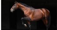 Lo sapevate che ogni volta che salite in sella state addestrando il vostro cavallo? 1