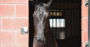 Quante cose conosci del viso/testa del tuo cavallo?