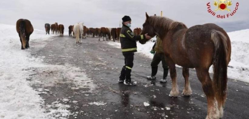 [Video]: 51 cavalli intrappolati dalla neve in salvo grazie ai Vigili del Fuoco