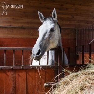 benessere cavallo