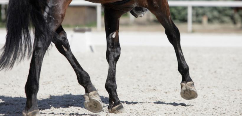 Il cavallo tende a preferire la lateralità sinistra? Una nuova ricerca spiega perché