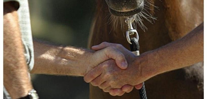 Il ruolo dell'istruttore nella compravendita dei cavalli 1