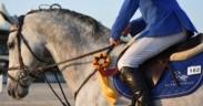"""Imparare a """"funzionare"""" con il libro """"Equestrian Mental Coaching"""" di Giuliano de Crescenzo 1"""