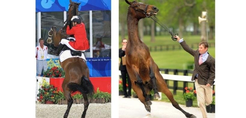 La risposta alla paura è il più grande avversario durante l'addestramento di un cavallo