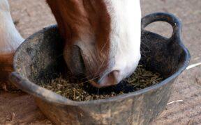 Harrison Horse Care