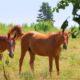 Nascita di un innovativo progetto: Horse Green Experience