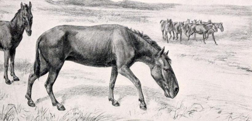 Nuove scoperte sulla storia evolutiva del cavallo 1
