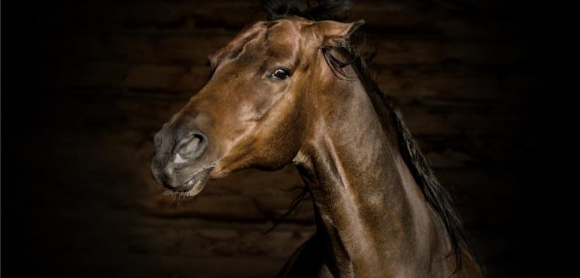 Il cavallo è arrabbiato? Ecco 10 segnali da non sottovalutare