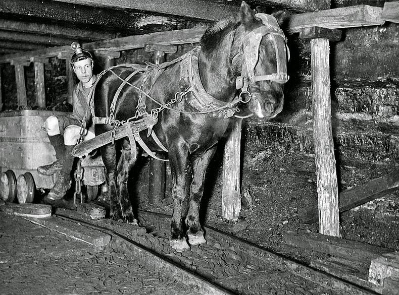 Scopriamo Sultan the Pit Pony, scultura di roccia in onore dei pony impiegati nelle miniere 2