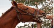 Dentista e cavallo, un binomio necessario