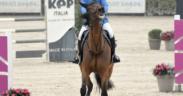 Problemi comportamentali dei cavalli? Basterebbe sapere sapere come e cosa chiedergli...
