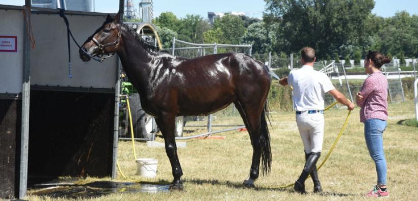 Estate = pericolo disidratazione: accorgimenti per la salute del cavallo