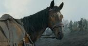 Letture d'agosto: Memorie di Albino, l'ultimo cavallo a compiere una carica militare